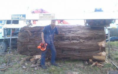 Meet woodsman Steve